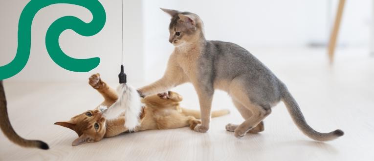 Kissanpennut leikkimässä